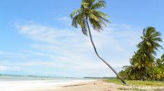 Praias paradisíacas em Alagoas: Japaratinga e São Miguel dos Milagres