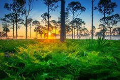 Beautiful Foggy Morning Sunrise in Palm Beach County.   Photo courtesy of Kim Seng | CaptainKimo.com