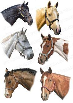 OregonPatchWorks.com - Sets - Horses