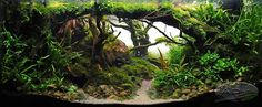Blue Aquarium is your source for freshwater aquarium plants gallery and finding aquarium plants information. Blue Aquarium hope to make your fish tank look like a real tiny piece of nature by aquarium plants decoration ideas. Planted Aquarium, Freshwater Aquarium Plants, Aquarium Fish, Aquarium Landscape, Nature Aquarium, Betta Tank, Fish Tank, Aquascaping Plants, Amazing Aquariums