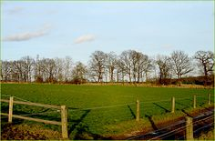 Caro's farm Denby Lodge would have views like this of Honnington, a venue in Kent used for horse and dogs shows, Horses And Dogs, Dog Show, Vineyard, Outdoor, Outdoors, Outdoor Games, Outdoor Living