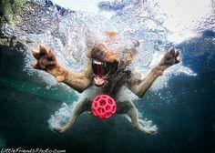 underwater photos of dogs seth casteel (5)