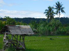 Bohol und die weltberühmten Chocolate Hills. Eine fantastische Rollenfahrt von Panglao durch das Naturschutzgebiet in Bohol.... mehr in unserem Beitrag dazu :)