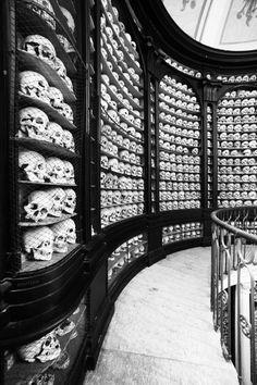 Skulls, a lot of skulls