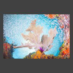 Sundance Vacation Villas, Underwater, Painting, Art, Art Background, Under The Water, Painting Art, Kunst, Paintings