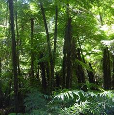 Conservation and sustainable use of Atlantic forest, San Rafael, Paraguay