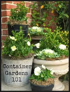 Best DIY Projects: Container Garden 101 Sharing all I know about container gardening and giving a palette for Spring! #bHomeApp