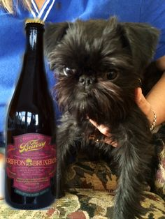 Beer? not a griffon this baby is an affen