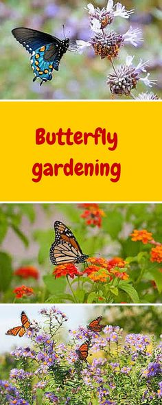As the weather warms, some of the delights of my garden, aside from the wonderful plants themselves, are the birds, bees and butterflies!
