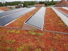 Sedumen senker temperaturen på taket og øker dermed solcellenes ytelse. Solar Panels, Pools, Bathrooms, Spa, Outdoor Decor, Instagram, Home, Sun Panels, Solar Power Panels