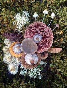 Voice of Nature — Mushroom landart by Jill Bliss Art Et Nature, Beauty Of Nature, Abstract Nature, Nature Crafts, Art Crafts, Mushroom Art, Mushroom Hunting, Nature Tattoos, Patterns In Nature