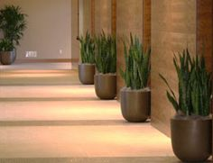 office plants. Jazz up your corridor with plants...see www.greendesign.com.au for more ideas