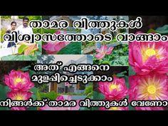 താമര വിത്തുകൾ ഓർഡർ ചെയ്യാം വഹട്സപ്പിലൂടെ Seed Shop Kerala   Lotus Farming - YouTube Seed Shop, Garden Online, Plant Care, Kerala, Farming, Lotus, Seeds, Gardening, Youtube