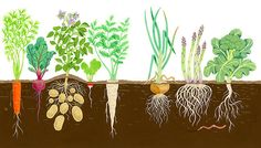 Well, then you'll enjoy these 50 free DIY raised garden bed plans to build your own raised garden bed cheaply and grow vegetables. Raised Garden Bed Plans, Building Raised Garden Beds, Garden Mural, Garden Art, Roots Drawing, Irish Festival, Preschool Art, Elementary Art, Gardening