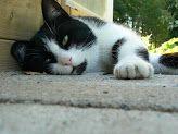 Koivikon Katveessa: Tulostettavaa materiaalia varhaiskasvatukseen Education, Cats, Animals, Gatos, Animales, Animaux, Animal, Onderwijs, Cat