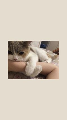 The Effective Pictures We Offer You About animal wallpaper iphone happy A quality picture can tell y Kitty Wallpaper, Wallpaper Gatos, Tier Wallpaper, Kawaii Wallpaper, Wallpaper Iphone Cute, Animal Wallpaper, Disney Wallpaper, Kittens Cutest, Cute Cats