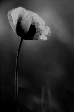 Black and White Photography Black And White Flowers, Black And White Pictures, White Art, Black And Grey, Morning Mantra, Foto Art, Photo Black, Light And Shadow, Shades Of Grey