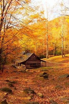 barn fall automne paysage landscape forestier chalet caban bois wood
