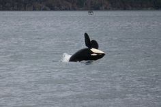 Back dive by the gorgeous J34 Doublestuf Photo by Melisa Pinnow