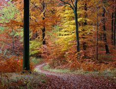 Yet another path in the autumn forest! by Ingrid0804, via Flickr