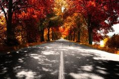 Path of autumn trees photography trees street autumn leaves orange bright seasons