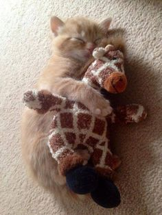 Even the cat loves giraffes! <3