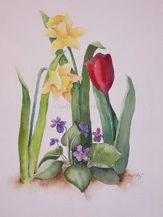 Tulip Jonquils & violets watercolor