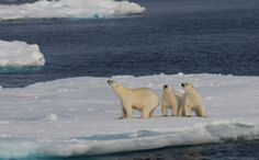 Global Warming is Turning The North Pole Into The North Pool