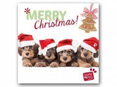Hunderassen WeihnachtskartenMyrna Weihnachtskarte: Dackel Quartett