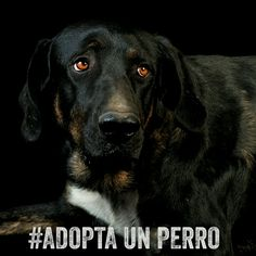 Nerón. Shelter dog is looking for home in Madrid, Spain @Villa_Pepa