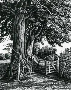 A Green Lane, Exmoor by Howard Phipps, wood engraving