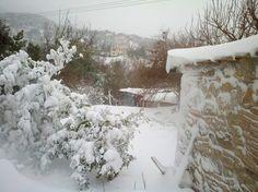 my garden dressed for winter