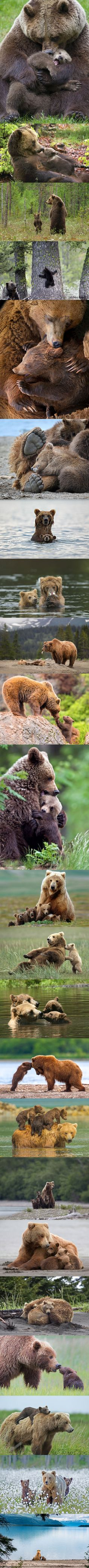Mother bear and cubs love. Maman ours grizzli et ses petits All Gods Creatures, Cute Creatures, Beautiful Creatures, Animals Beautiful, Beautiful Things, Animals And Pets, Baby Animals, Funny Animals, Cute Animals