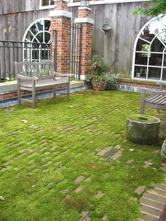 brick and moss {garden love}. Is there a moss that grows in full sun? I would love to do this to my paito