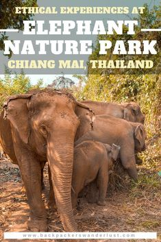 Elephant Experience With Elephant Nature Park In Chiang Mai, Thailand. A tour with Elephant Nature Park in Chiang Mai, Thailand. I booked their Elephant Freedom program including elephant feeding, bathing, walking and more! Travel Jobs, Ways To Travel, Best Places To Travel, Budget Travel, Thailand Travel Guide, Visit Thailand, Thailand Vacation, Khao Lak, Koh Tao