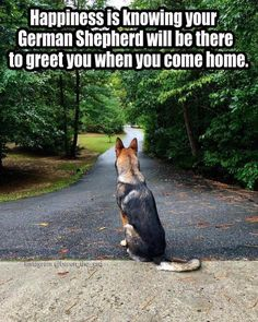 The German Shepherd Everything you want to know about GSDs. Health and beauty recommendations. Funny videos and more