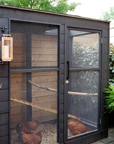 mod backyard chicken coop