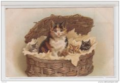 Cartes Postales > Thèmes > Animaux & faune > Chats - Delcampe.fr