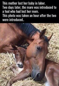 Honey nut feelios - Horses Funny - Funny Horse Meme - - Capable of love and feelings the same as any dumb human The post Honey nut feelios appeared first on Gag Dad. Funny Horses, Cute Horses, Pretty Horses, Horse Love, Beautiful Horses, Animals Beautiful, Mini Horses, Beautiful Cats, Cute Little Animals
