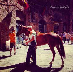 Il cavallo vincitore