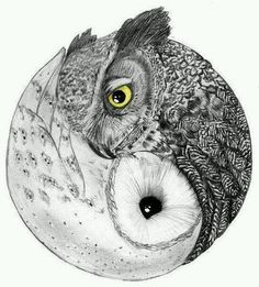 Owl ying yang. I need this.