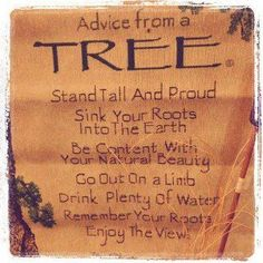 Advice from a tree. Stand tall and proud, sink your roots into the earth, be content with your natural beauty, go out on a limb, drink plenty of water, remember your roots, enjoy the view.