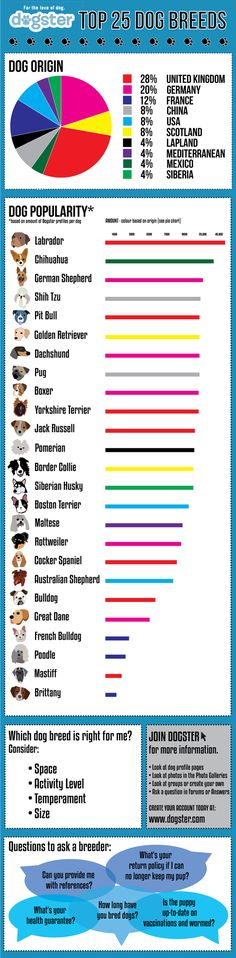 The top 25 dog breeds are represented in this student-created infographic #caninecommunityreporters #wccrtv #pamppllc #caninemarketing #petinfographics #doginfographics #dogs