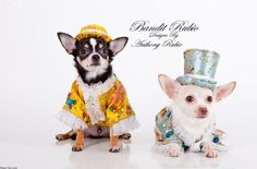 Anthony Rubio, Pet Couturier designed these satin ensembles each with their own coordinating hand made hat for his Chinoiserie Collection modled here by Celebripups / Couture Dogs Bogie and Kimba.               Photo by Yoni Levy