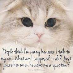 People think I'm crazy because I talk to my cat. What am I supposed to do? Just ignore him when he asks me a question? Crazy Cat Lady, Crazy Cats, I Love Cats, Cute Cats, Adorable Kittens, Funny Animals, Cute Animals, Funny Horses, Cat Quotes
