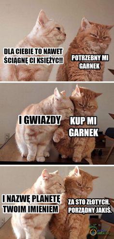 Funny Memes, Jokes, Kittens, Cats, Manga, Animals, Life, Gatos, Animais