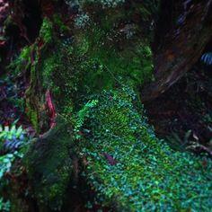 【10chillroom01】さんのInstagramをピンしています。 《#ぶらぶら #21世紀の森 #自然 #森 #苔 #nature #forest #moss #green》