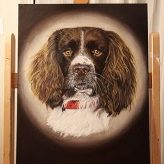 English Springer -18x24 -Oil on canvas board