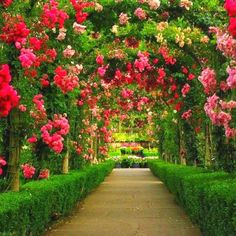 rose-alley garden feature - Google Search