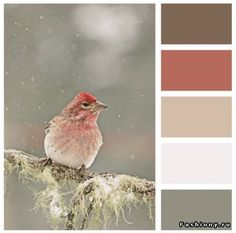 winter bird color palette with muted reds, white and gray Color Harmony, Color Balance, Colour Pallette, Colour Schemes, Color Combos, Palette Design, Brick Colors, Design Seeds, Home And Deco